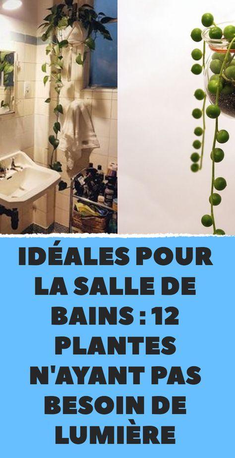 Ideales Pour La Salle De Bains 12 Plantes N Ayant Pas Besoin De