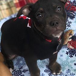 Detroit Mi Terrier Unknown Type Medium Meet Billy A Dog For Adoption Pet Adoption Dog Adoption Pets
