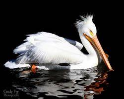 Pelican By Lost Nomad07 Pelican Lost Animals