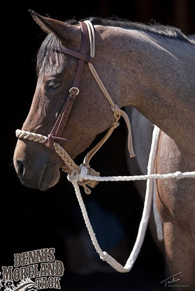 c9b08c08ae8 This hackamore is really comfortable for the horse. It lays flat on the  nose and