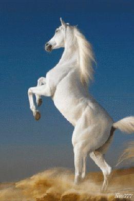 Gifs Gratuits Pjc Most Beautiful Horses Horses Horse Wallpaper
