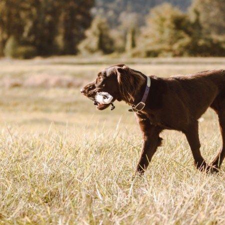 True Stories That Will Make Training A Bird Dog Seem Less Daunting