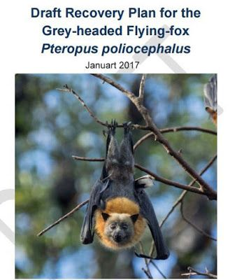 Draft Recovery Plan for the Grey-headed Flying-fox Pteropus - recovery plan