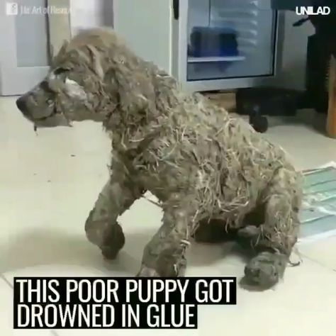 This puppy was god drowned in glue by naughty kids in sake of fun and rescued by kind team ❤️♥️ please follow Animals Board for more videos