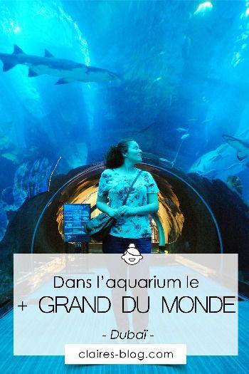 Plus Grand Aquarium Du Monde : grand, aquarium, monde, L'aquarium, Grand, Monde, Voyage, Dubai,, Émirat
