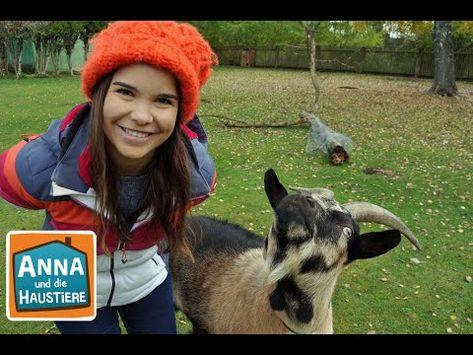 Anna Und Die Wilden Tiere Youtube In 2020