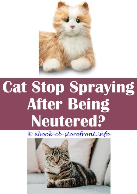 How In the direction of Fill up A Random Domestic cat Since Spraying