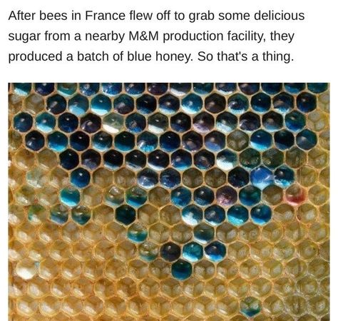 Blue Honey<< Conclusive proof that bugs can get into our candies! Which is bad for the bugs and gross for us....