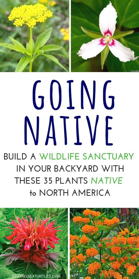 How to Create a Wildlife Sanctuary With Native Plants Select a location for your wildlife sanctuary that provides both Sun and shade. Create a wildlife sanctuary by providing basic food, water, and shelter. Florida Native Plants, California Native Plants, Florida Landscaping, Florida Gardening, Landscaping Ideas, Garden Landscaping, Landscaping Equipment, Outdoor Plants, Garden Plants