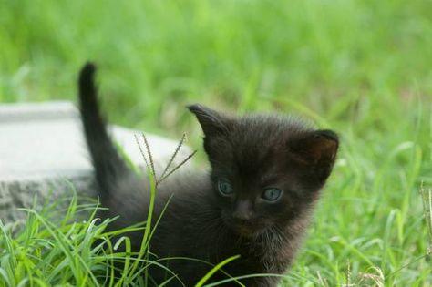 Black Jack Pets Jack Black Animals