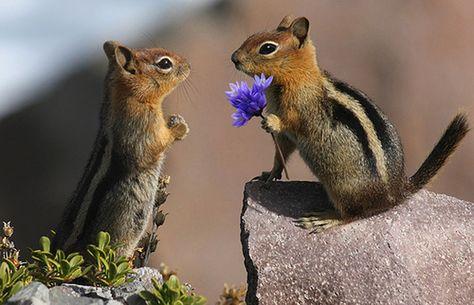 Los animales aman fotos: Animales encantan las fotos