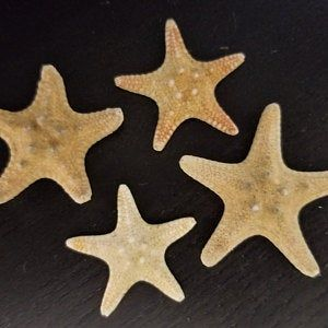 70 White Starfish In Bulk Starfish 1 To 2 5 8 Inch Etsy In 2020 Nautical Decor Craft Wedding Starfish