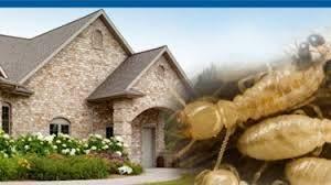 سبب وجود النمل الابيض في البيت وطرق التخلص منه في المنزل والحقول تعرف عليه Wood Firewood Crafts