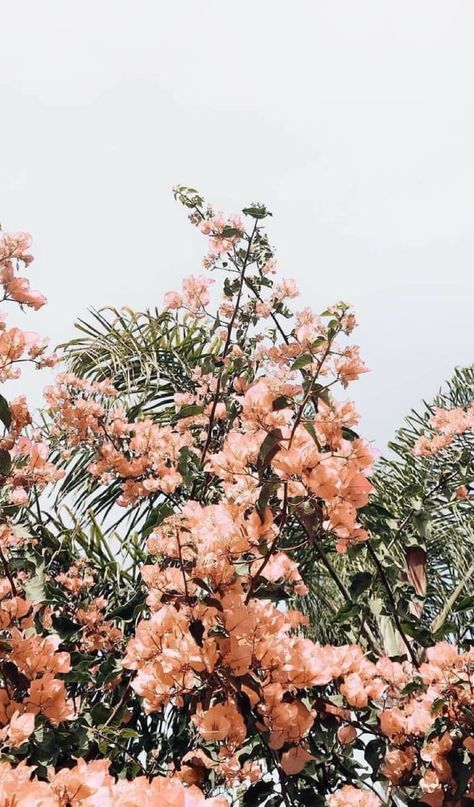flower aesthetic x Peach Aesthetic, Nature Aesthetic, Flower Aesthetic, Korean Aesthetic, Aesthetic Vintage, Aesthetic Drawing, Disney Aesthetic, Aesthetic Collage, Summer Aesthetic