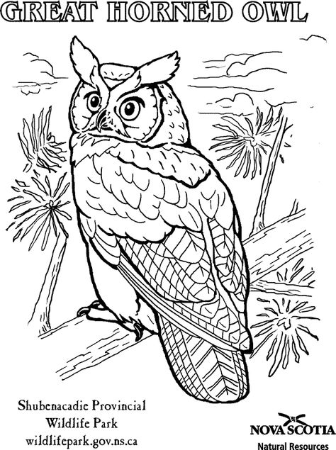 Great Horned Owl Colouring Sheet Owl Coloring Pages Animal Coloring Pages Bird Coloring Pages