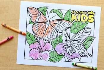 Glitter Rainbow Butterfly Coloring And Drawing Painting For Kids Coloring Videos Dildil Kids Art Youtub Butterfly Drawing Butterfly Painting Art For Kids