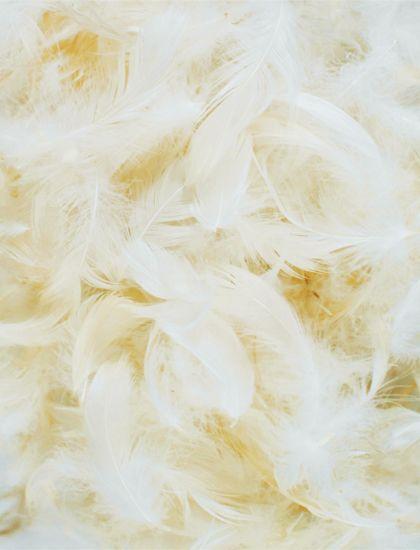 まるで天使の羽 ふわふわフェザー がテーマのウェディングアイディア特集 にて紹介している画像 フェザー クリスマス デコレーション ウェディング