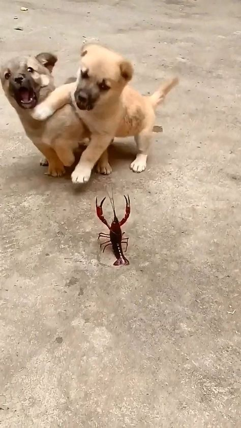 What the fluff is this creature hooman - MyKingList.com