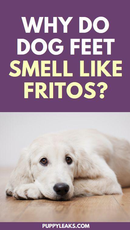 Why Do Dog Feet Smell Like Fritos Dog Smells Dogs Dog Care Tips
