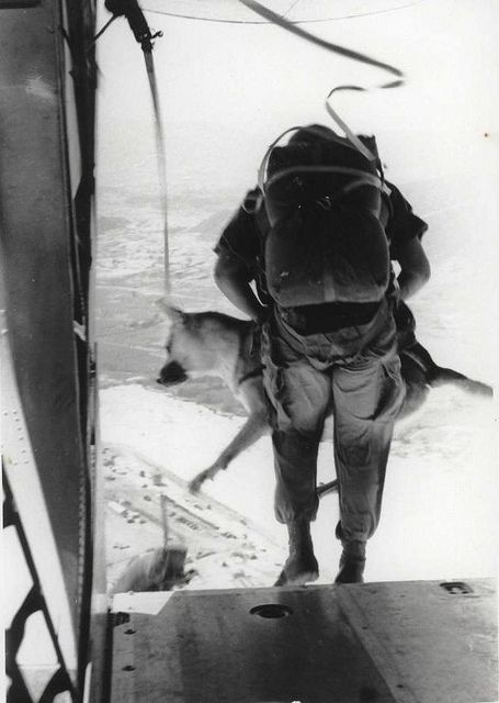 "Sgt. Spano and Lobo, Da Nang, Vietnam, August 1968 by Marine Corps Archives  Special Collections, via Flickr. One of a series of official Marine Corps photographs of Sgt. Spano and his War Dog Lobo completing a parachute jump in Da Nang, Vietnam, August 1968.    The caption reads ""Away they go—Spano and Lobo dive out of the plane for the long awaited jump.""    From the Jonathan F. Abel Collection (COLL/3611), United States Marine Corps Archives  Special Collections    OFFICIAL USMC PHOTOGRAPH"