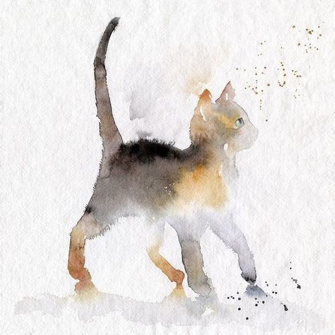 Dessin Chat Aquarelle Catwatercolor Catillustration Dessin