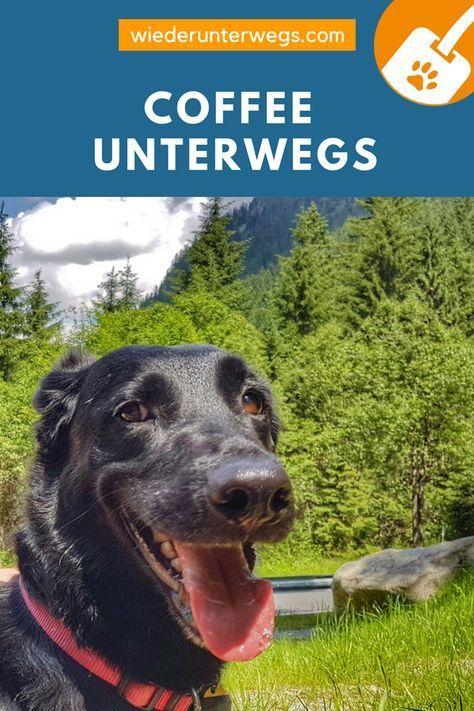 Camping Mit Hund 10 Ganz Ernst Gemeinte Tipps Und Knallharte Facts Urlaub Mit Hund Camping Und Hunde