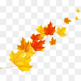 Autumn Maple Leaf Element Design Maple Leaf Clipart Fall Maple Leaf Element Png And Vector With Transparent Background For Free Download Maple Leaf Clipart Maple Leaf Drawing Leaf Clipart