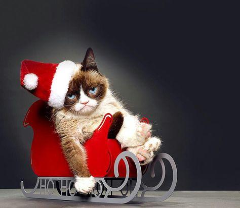 Christmas In July Cat Meme.Christmas In July Grumpy Cat Gets A Movie Deal Grumpy Cat