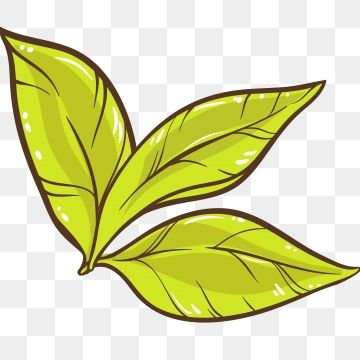 Tea Green Leaf Plant Picking Tea Leaf Clipart Tea Green Leaf Png And Vector With Transparent Background For Free Download Leaf Clipart Plant Vector Watercolor Plants