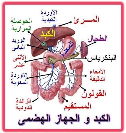 باب كوم مؤتمر دولي لأمراض الجهاز الهضمي والكبد لدى الأطفال الاثنين المقبل Islam Quran Arabic Calligraphy Quran