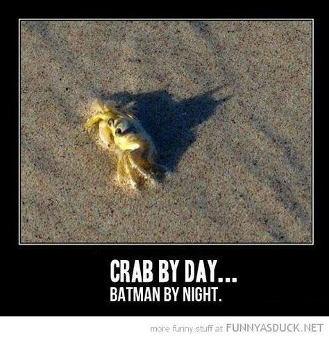 The dark shadow rises funny captions funny humor funny memes animal funny 9gag Funny, Funny Shit, Haha Funny, Funny Cute, Funny Stuff, Funny Things, Memes Humor, Funny Memes, Funny Ads