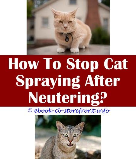 3 Discerning Tips Frontline Spray For Cats Walmart How To Make Boy Cats Stop Spraying Cat Spraying Vibrating Tale After Being Neutered Premier Marigold Sensible