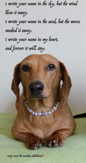 Dachshund Quotes Dog Quotes Quotes Sausage Dog Dachshund Love