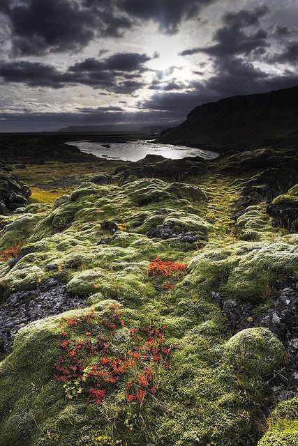 Autumn colors in Iceland - Imgur