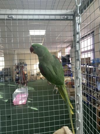 Birds Rehome Buy And Sell Preloved In 2020 Unusual Animals Birds Pet Accessories