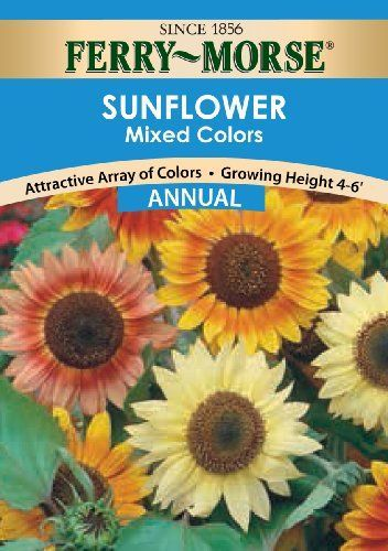 Ferry Morse Sunflower Annual Flower Seeds Mixed Colors 1 Gram Packet Growing Sunflowers Annual Flowers Flower Seeds