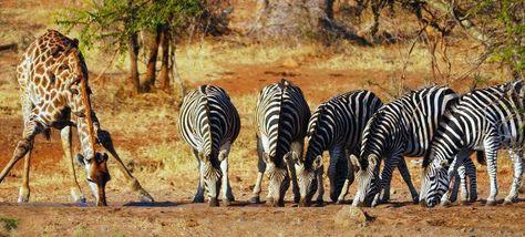 Viajes Sudafrica Parque Nacional Kruger Wildlife Safari