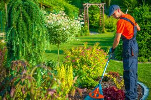 Free Online Diploma In Garden Design And Maintenance Course In 2020 Garden Maintenance Garden Design Garden Planning Layout