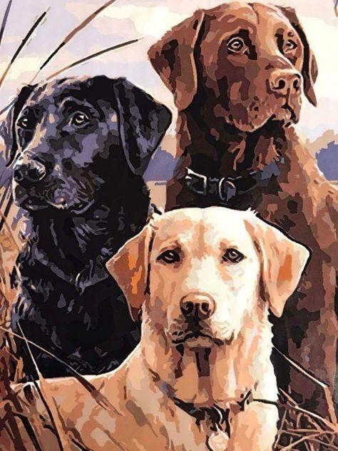 ป กพ นโดย Master Ph ใน Dogs