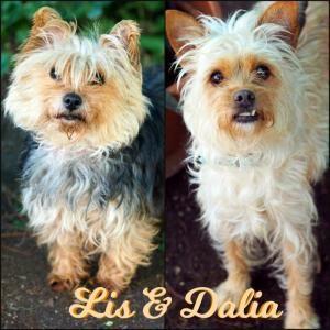 Adoptar Perros Pequeños En Madrid 2 Bambú Difunde Perros Pequeños En Adopcion Perros En Adopcion Madrid Adoptar Un Perro