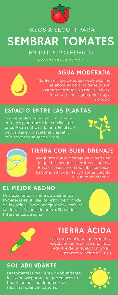 120 Ideas De Plantas Plantas Jardinería En Macetas Ideas De Jardinería