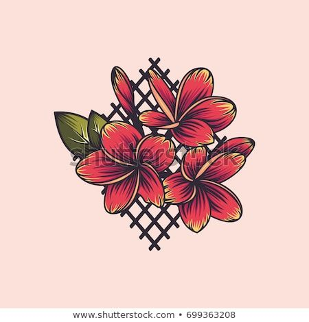 Plumeria Flower Embroidery Vector Floral Print Plumeria Floral Prints Embroidery Flowers