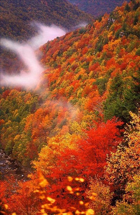 West Virginia is one of the most beautiful places I have ever seen. My job sent me there for 2 weeks. Beautiful World, Beautiful Places, Beautiful Pictures, Autumn Scenes, Seasons Of The Year, All Nature, Fall Pictures, West Virginia, Virginia Fall
