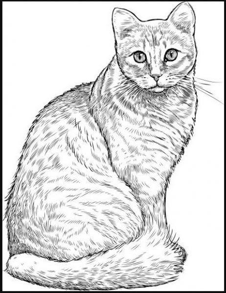 Gambar Kucing Sketsa : gambar, kucing, sketsa, Gambar, Kartun, Manusia, Kucing-, Kumpulan, Sketsa, Kucing, Hingga, Menggambarnya, Download, Bolehkah, Kucing…, Kucing,, Kartun,