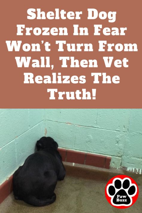 """She was frozen in fear, lying in her own urine, afraid to make eye contact, and """"thinking just maybe she can fade away into this wall"""". 😮"""