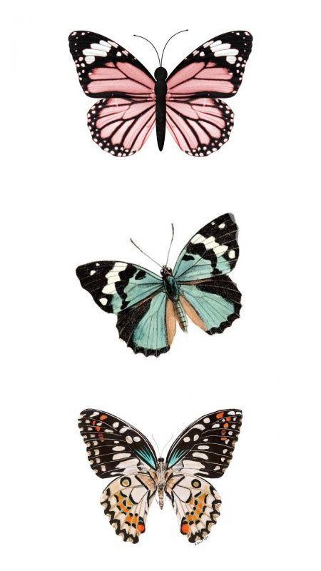Butterflies In 2020 Butterfly Wallpaper Iphone Edgy Wallpaper Pretty Wallpaper Iphone