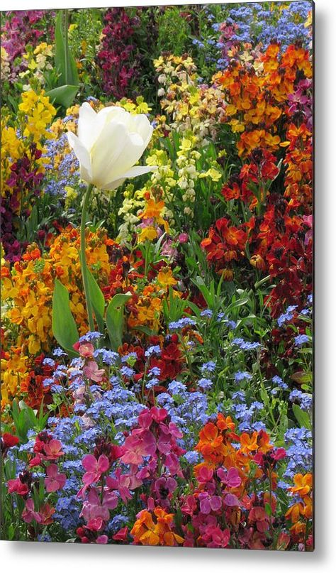 Garden Metal Print featuring the photograph Perfect Garden by Frank Townsley