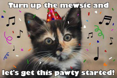 100 Best Happy Birthday Cat Memes Images Happy Birthday Funny Cats Cat Birthday Funny Cat Birthday Memes