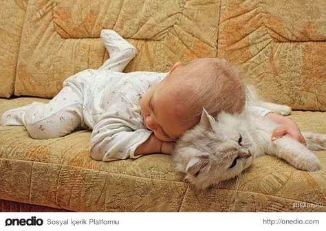 Kediler ve Bebekler