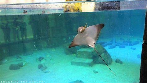 Seaquest Interactive Aquarium Las Vegas Nv